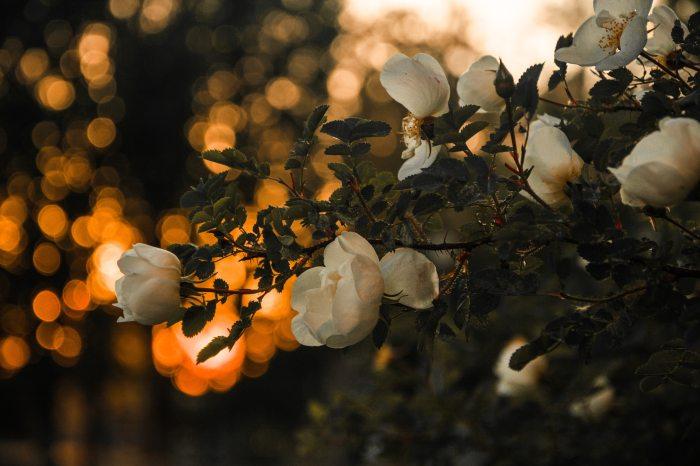 Photo by Irina Iriser from Pexels